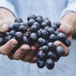 Tedd Koren, DC Defends Organic Food