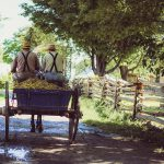 amish in a buggy